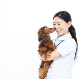 動物病院の求人 - 大阪府 | Careerjet.jp