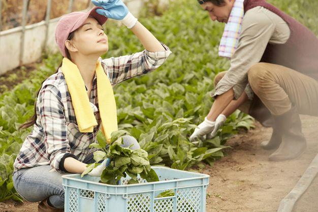 農業に転職する心構え